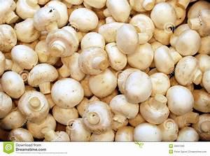 Fresh Mushrooms Stock Photo - Image: 30027590