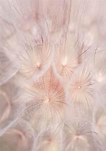 Blush Pink Wall Art Nature Photography, Dandelion Wall Art ...