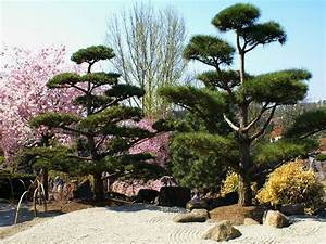 Wanddeko Für Garten : ega japanischer garten foto bild pflanzen pilze ~ Watch28wear.com Haus und Dekorationen