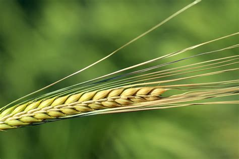 Aug 09, 2021 · recently submitted and approved recipes appear on this page. Barley, The Super Grain- Health Benefits, Side Effects & How to cook