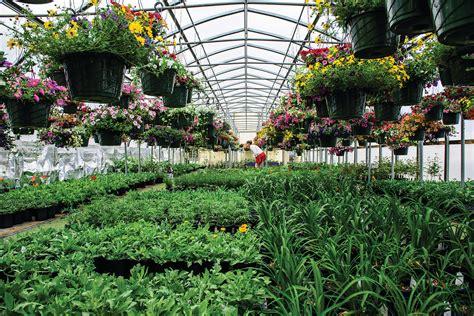 garden center petrees nursery greenhouse