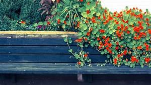 Welche Pflanzen Für Balkon : kapuzinerkresse auf dem balkon ziehen so f hlt sie sich wohl ~ Michelbontemps.com Haus und Dekorationen