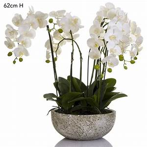 White Orchid in Clay Pot INTERIORS ONLINE