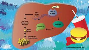 Unveiling The Biology Behind Nonalcoholic Fatty Liver Disease