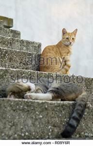 Im Sitzen Schlafen : wei e katze sitzt auf einer treppe in griechenland stockfoto bild 310599919 alamy ~ Watch28wear.com Haus und Dekorationen