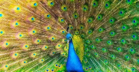 color vision    animals wired