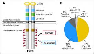 eGFR Mutation Lung Cancer