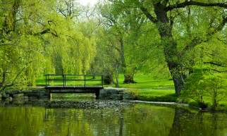 are you like a willow tree merikay hunt