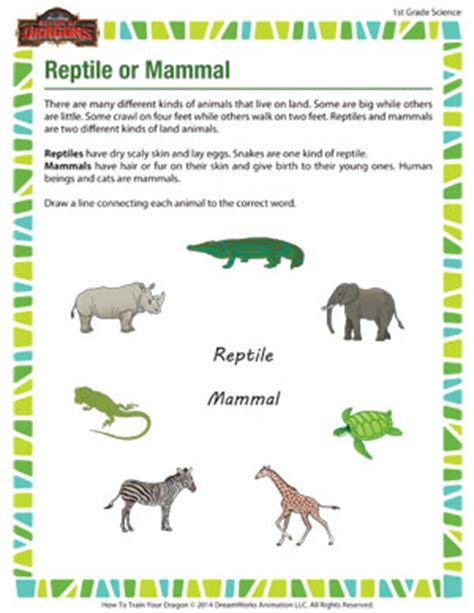 reptile or mammal 1st grade science worksheet school