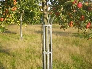 Protection Arbres Fruitiers : protection des arbres page 2 ~ Premium-room.com Idées de Décoration