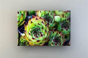 Pflanze Mit Stacheln : pflanze mit stacheln ~ Frokenaadalensverden.com Haus und Dekorationen