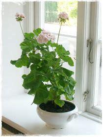 landyshi  okne lilly   valley pinterest