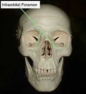 Cranial Fossa and Foramina at University of Western ...