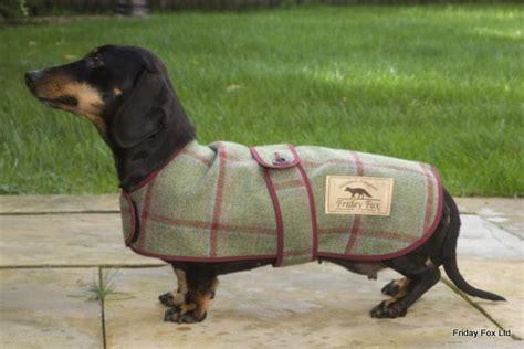 dachshunds tweed moleskin miniature dachshund coat