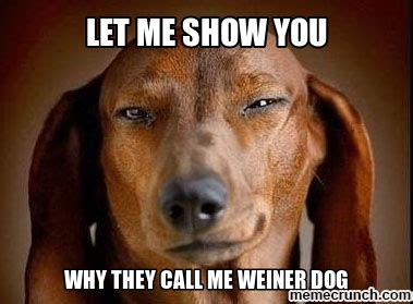 Wiener Dog Meme - funny weiner dog memes quotes