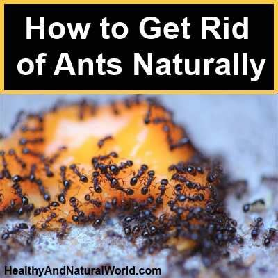 how to get rid of ants in the house how to get rid of ants cheaply and naturally ants a