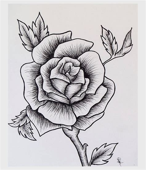 drawings  roses  psd ai eps format document