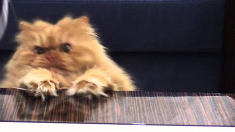 angry cat garfi why