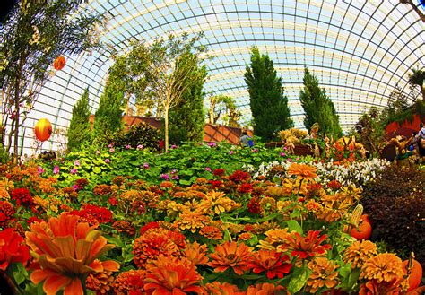 flower dome at gardens by the bay singapore the cool
