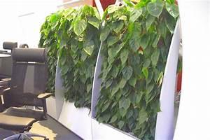 Büro Pflanzen Pflegeleicht : pflanzen f r menschen part 16 ~ Michelbontemps.com Haus und Dekorationen