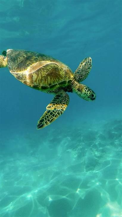 Turtle Sea Desktop Wallpapers Iphone Aesthetic Phone