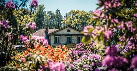 Foto: Rododendru ziedu kupenas Botāniskajā dārzā - DELFI