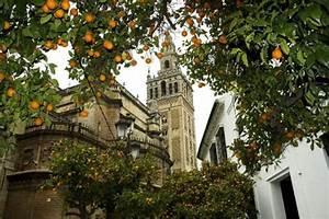 5 Curiosidades Sobre Las Famosas Naranjas De Sevilla