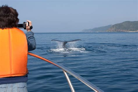 A Guide To Whale Watching In Cape Town  Cape Town Tourism