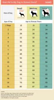 cat years compared to humans 25 best ideas about on lover