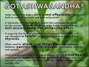 Ancient Miracle Herb  Ashwagandha