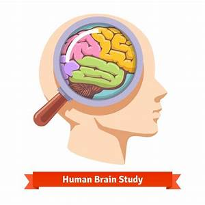 Magnifying glass zooming inside human head Vector | Free ...