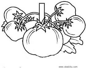 gambar menjual sifat unggul tomat hibrida toti aura seed