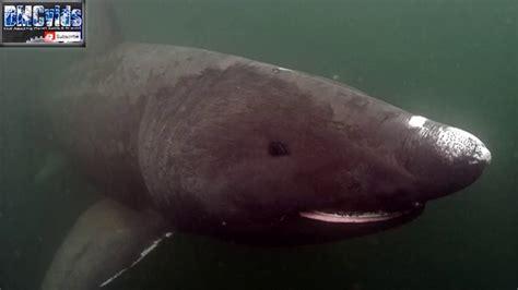 New Megalodon Shark Caught On Tape 2018  Newest Evidence