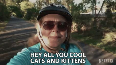 hey   cool cats  kittens   gif