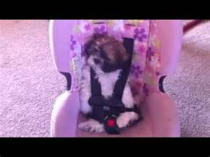 Dogs in Car Seats for Babies