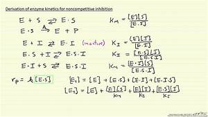 Derivation Of Enzyme Kinetics For Noncompetitive Inhibition