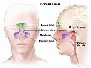 Paranasal Sinus And Nasal Cavity Cancer Treatment