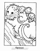 Coloring Opossum Animals Sheets Fun Sheet Places sketch template