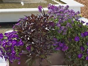 Immergrüne Pflanzen Für Balkonkasten : ideen f r ihre balkon gestaltung in blau und schwarz ~ Markanthonyermac.com Haus und Dekorationen