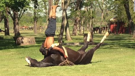 'horse Yoga' Tames More Than Animals Pocket Coffee Mercator Mexico Starfish En Antwerpen Puns For Instagram Rook Locations In Nj Online Bestellen Kde Koupit And Acoustic