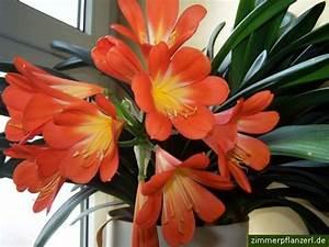 Pflegeleichte Zimmerpflanzen Mit Blüten : pflegeleichte zimmerpflanzen zum verschenken ~ Sanjose-hotels-ca.com Haus und Dekorationen