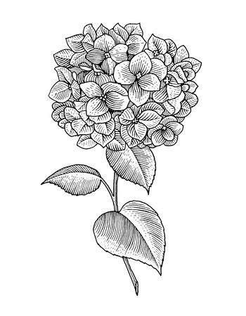 Stock Vector   Hydrangea tattoo, Sleeve tattoos, Flower