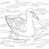 Albatross Coloring Bird Water Pages Coloringbay sketch template