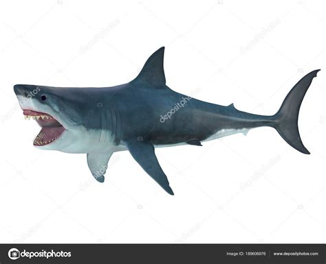 Megalodon Images Megalodon Shark Attack Posture Stock Photo 169 Coreyford