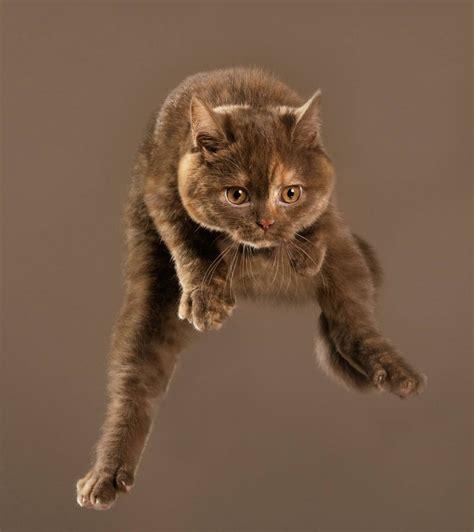 flying cats  elegant segeln diese katzen durch die luft