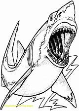 Shark Coloring Megalodon Drawing Pages Printable Sharknado Template Draw Colouring Print Getcolorings Realistic Hungry Sharks Getdrawings Sheets Skill Boy Animals sketch template