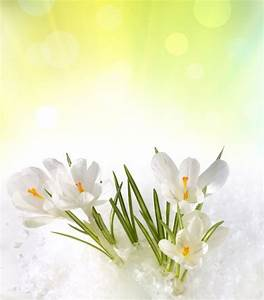 Spring flowers bouquet background free stock photos ...