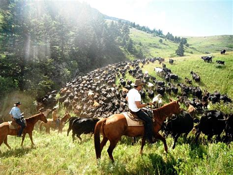 cattle ranch drive tx wyoming california lovell hunewill montana guest drives moving tripadvisor equitrekking wy west hotel dive border ab