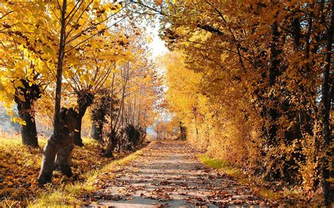 Autumn Roads Wallpapers by Autumn Road Mystery Wallpaper