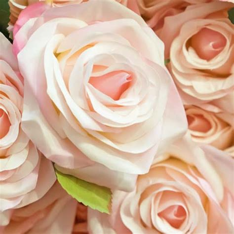 blush colored flowers flowers ideas for review